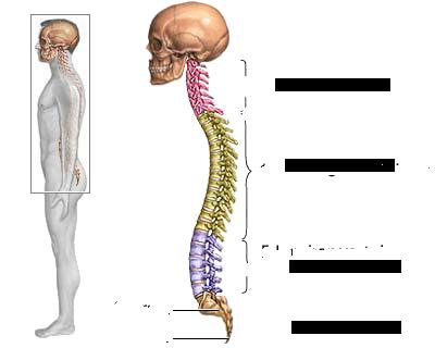 provoaca dureri de spate severe